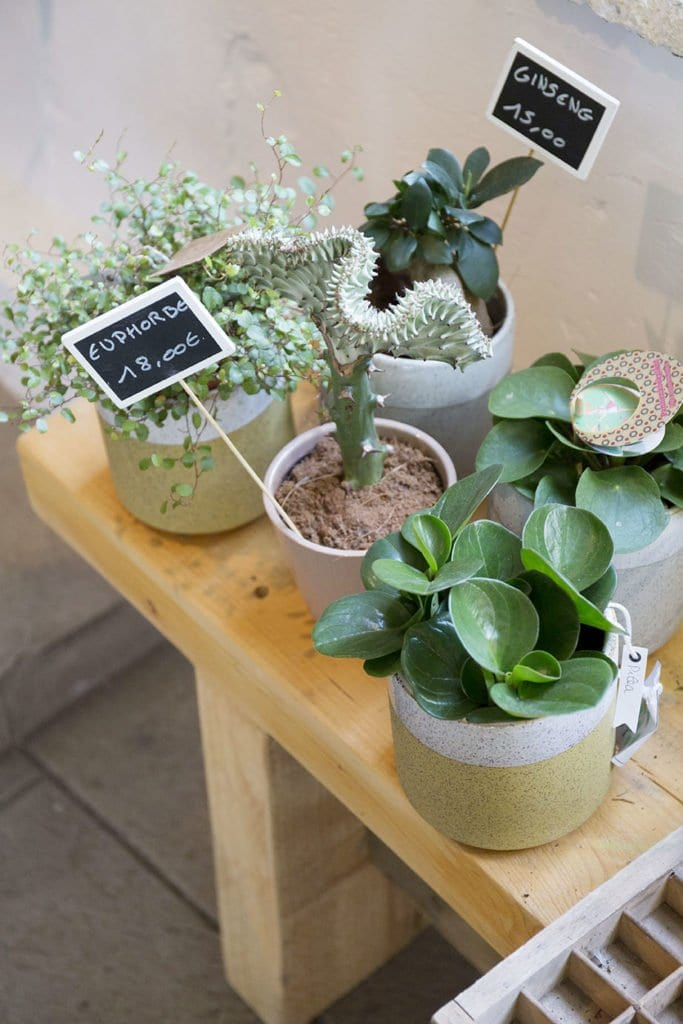 boutique canopée montpellier plantes